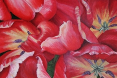 Tripple Tulip 2